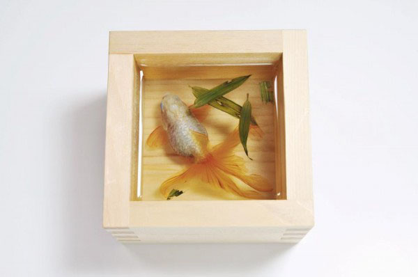 3D-Fish-Paintings (10)