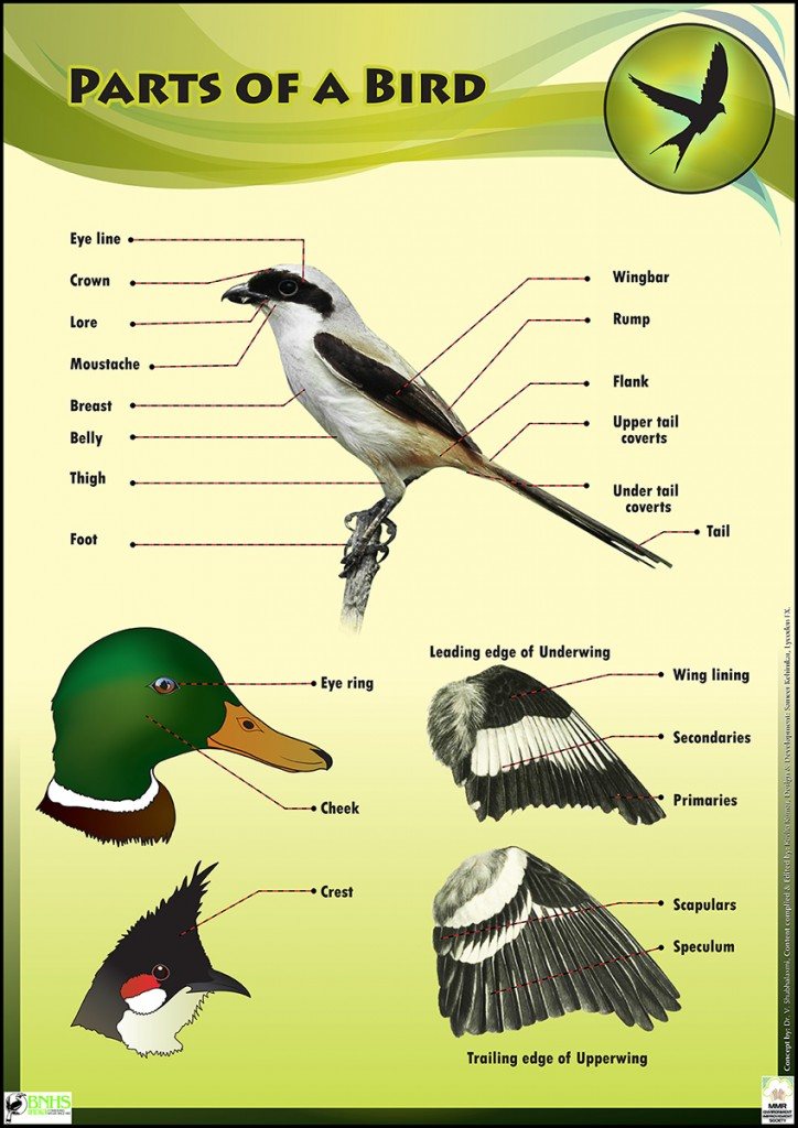 bird life educational conservation poster for kids design illustrated (2)