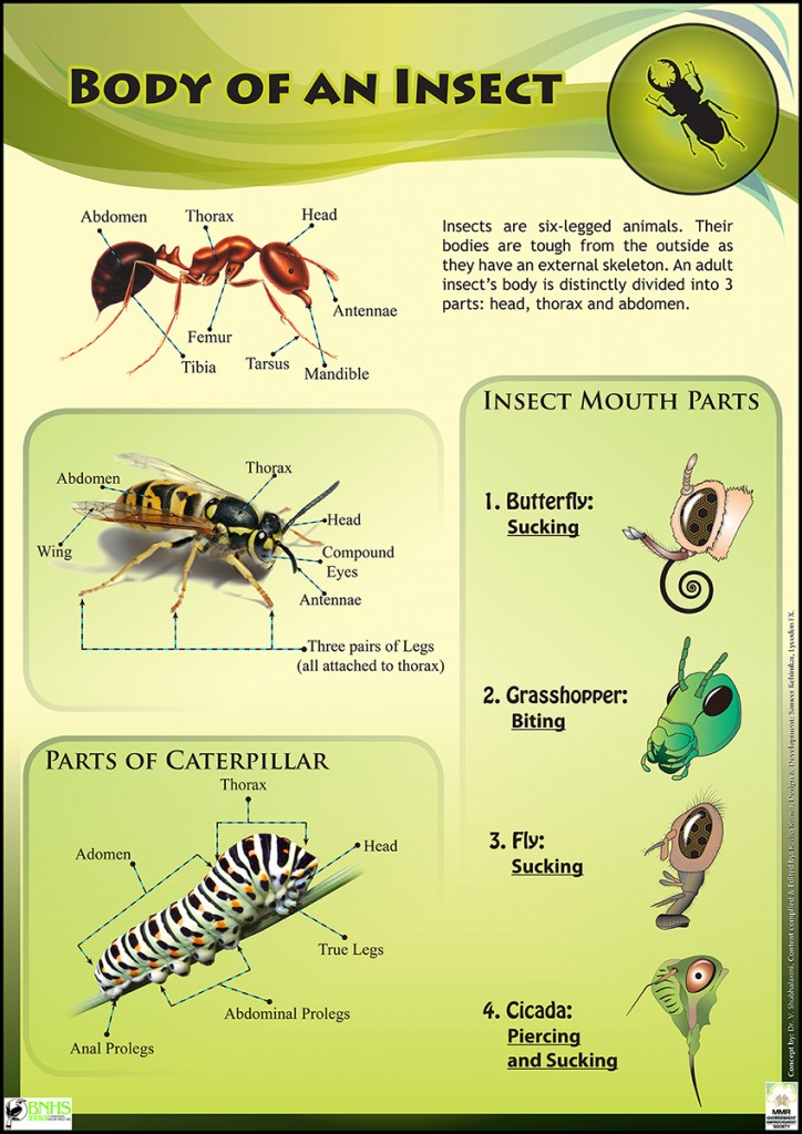 Insect Body parts explained
