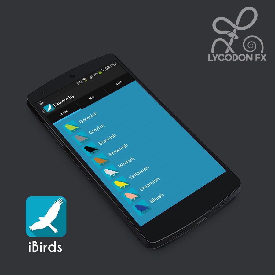 ibirds