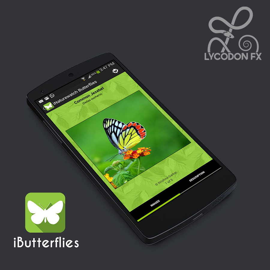 iButterflies mobile app climate change urban nature watch lycodonfx india golbal warming guide
